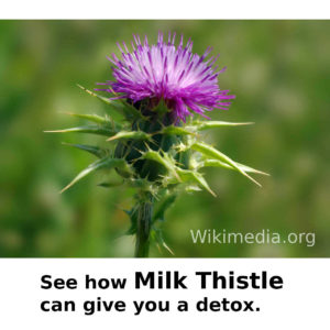 Milk Thistle for detox.