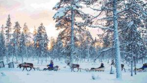The reindeer northern light hunt