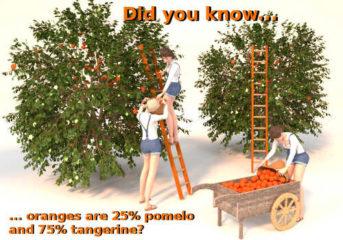 orange tree scene 2