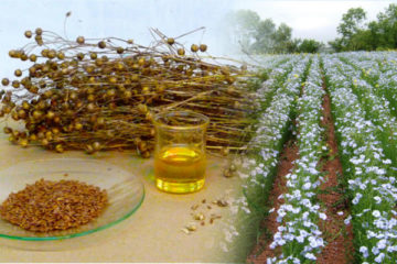 Brown linseed health benefits from the cold pressed oil.
